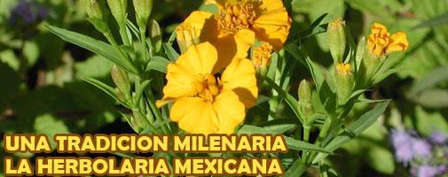 ZONAS CLIMATICAS EN MEXICO P166HERBOLARIA